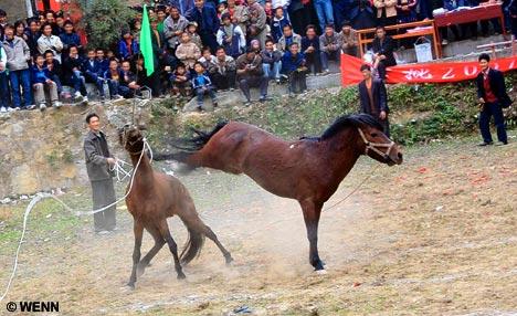 chevauxcombat2sj91.jpg
